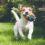 2017年アメリカ動物病院協会による犬のワクチンガイドライン